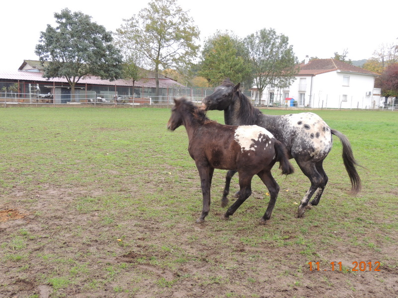 Mes chevaux, un mélange d'un peu tout le monde! - Page 2 26611