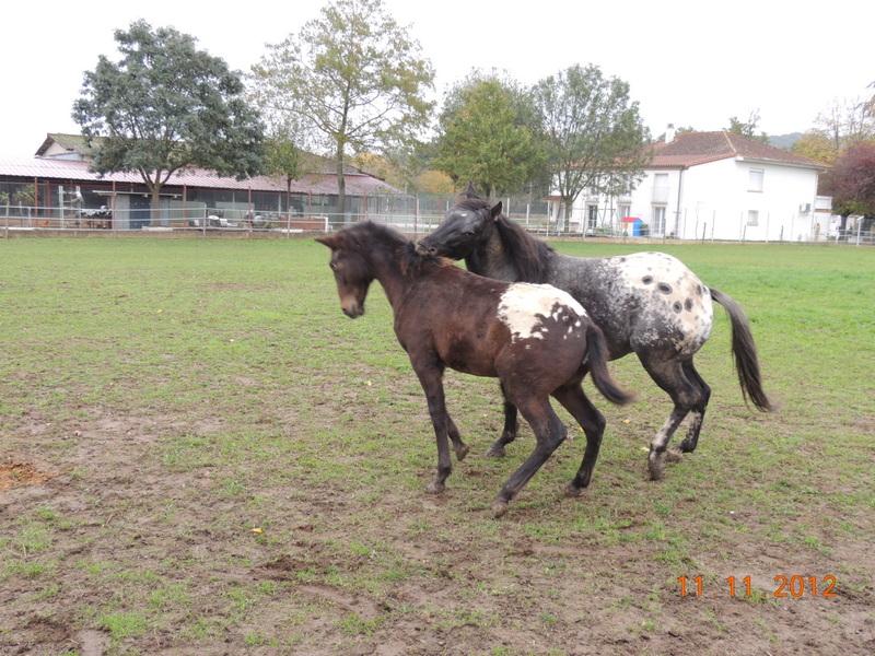 Mes chevaux, un mélange d'un peu tout le monde! - Page 2 26711