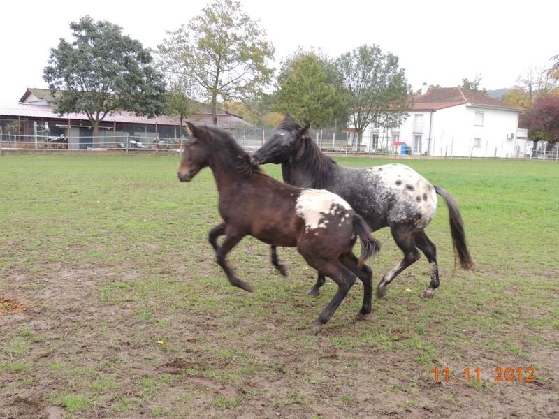 Mes chevaux, un mélange d'un peu tout le monde! - Page 2 26810