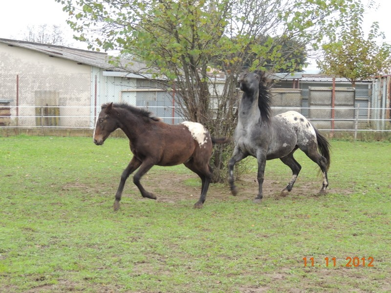 Mes chevaux, un mélange d'un peu tout le monde! - Page 2 26910