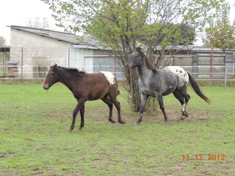 Mes chevaux, un mélange d'un peu tout le monde! - Page 2 27010