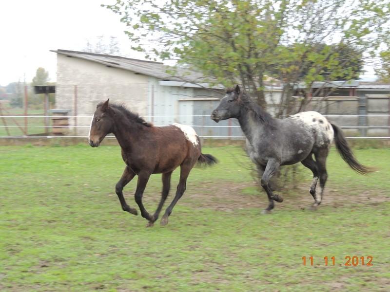 Mes chevaux, un mélange d'un peu tout le monde! - Page 2 27110