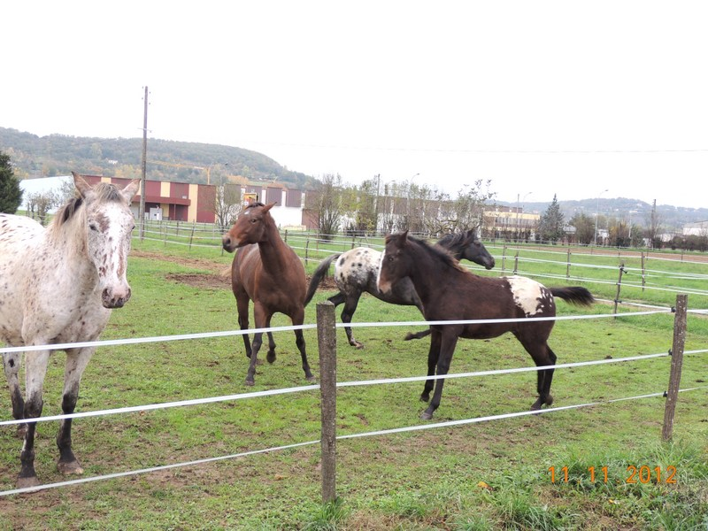 Mes chevaux, un mélange d'un peu tout le monde! - Page 2 28010