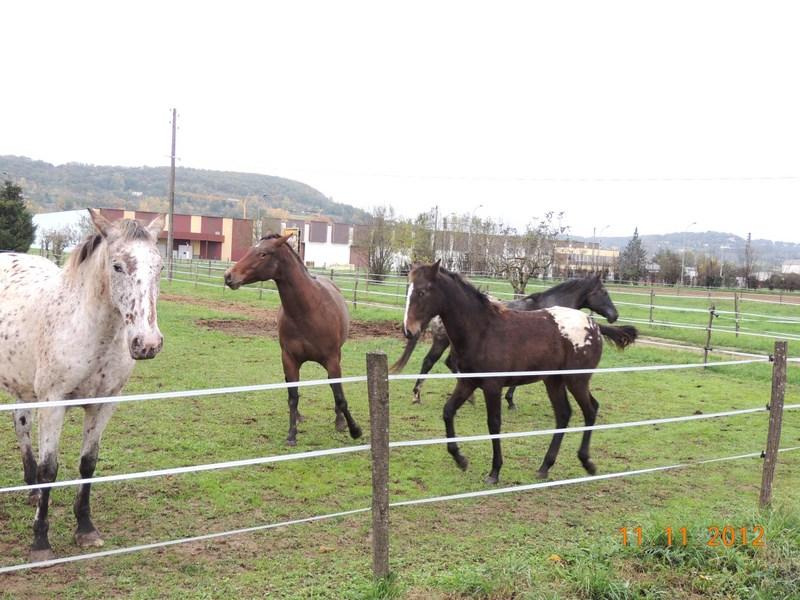Mes chevaux, un mélange d'un peu tout le monde! - Page 2 28110