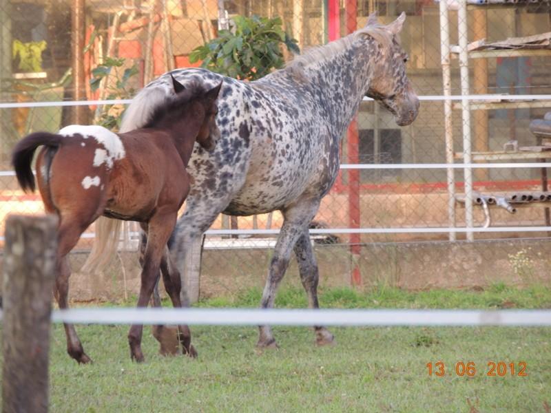 Mes chevaux, un mélange d'un peu tout le monde! 29710