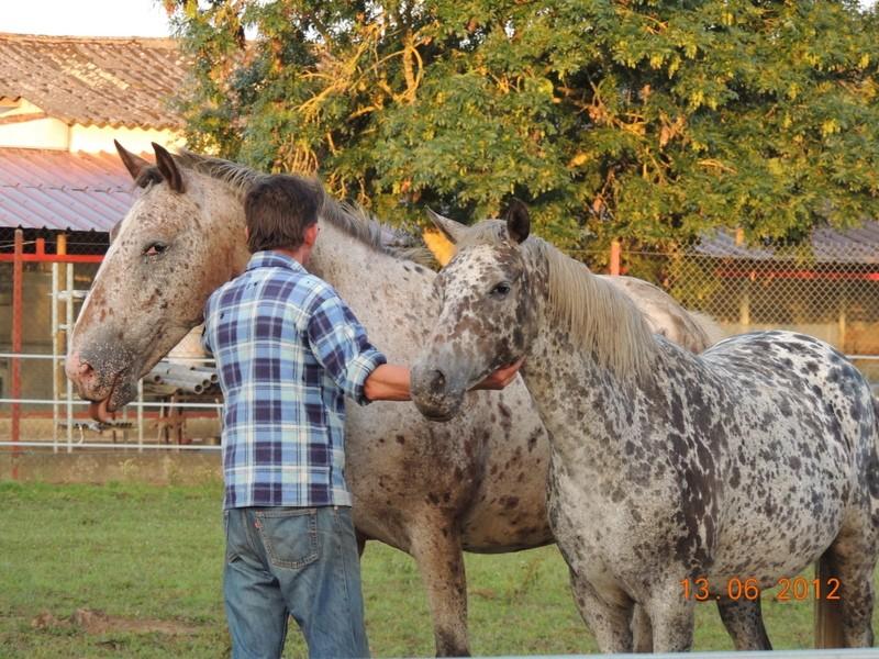 Mes chevaux, un mélange d'un peu tout le monde! 31210
