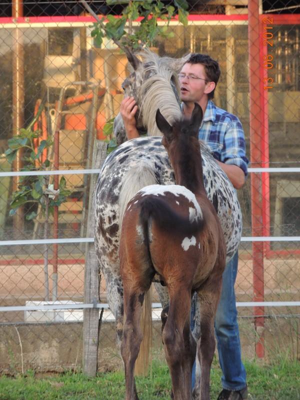 Mes chevaux, un mélange d'un peu tout le monde! 31710