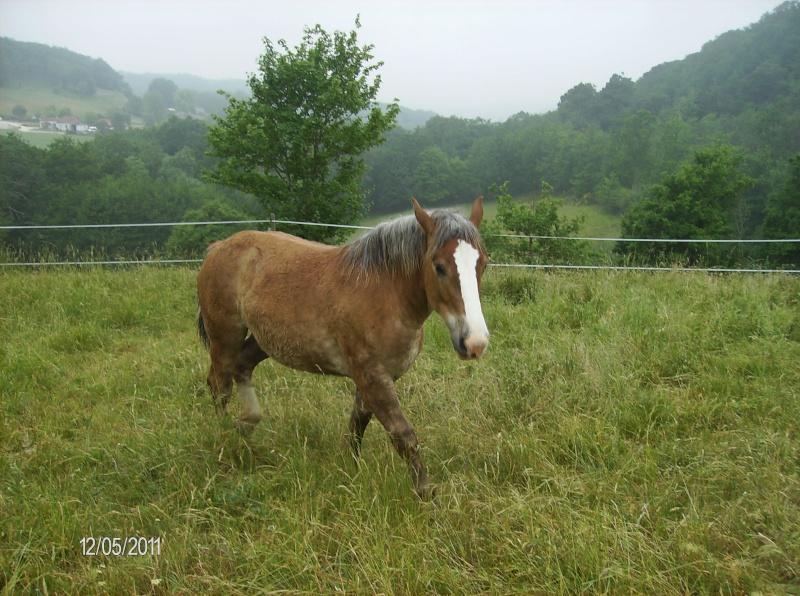 J'ai d'autre chevaux Airell14
