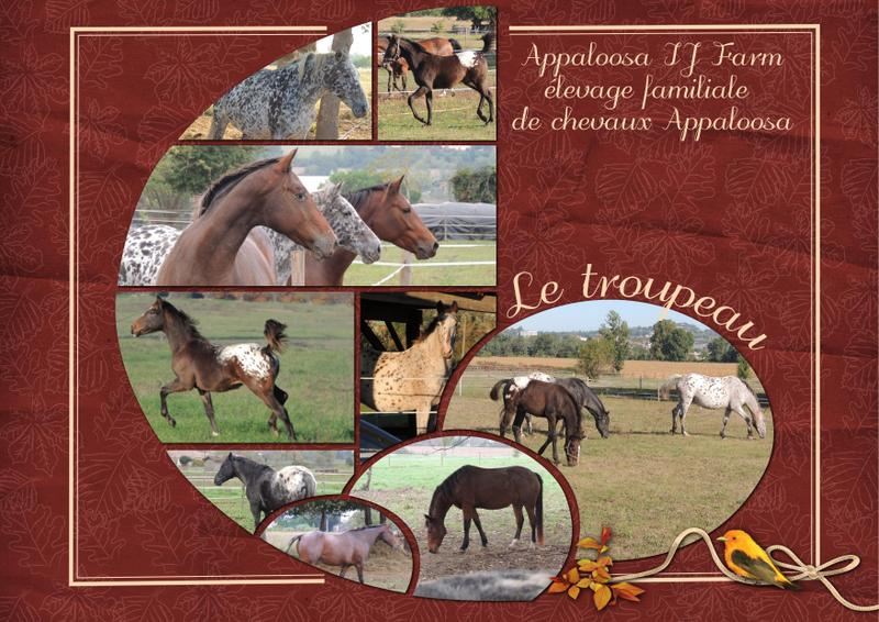 Mes petits montages photo!! - Page 2 Appalo22