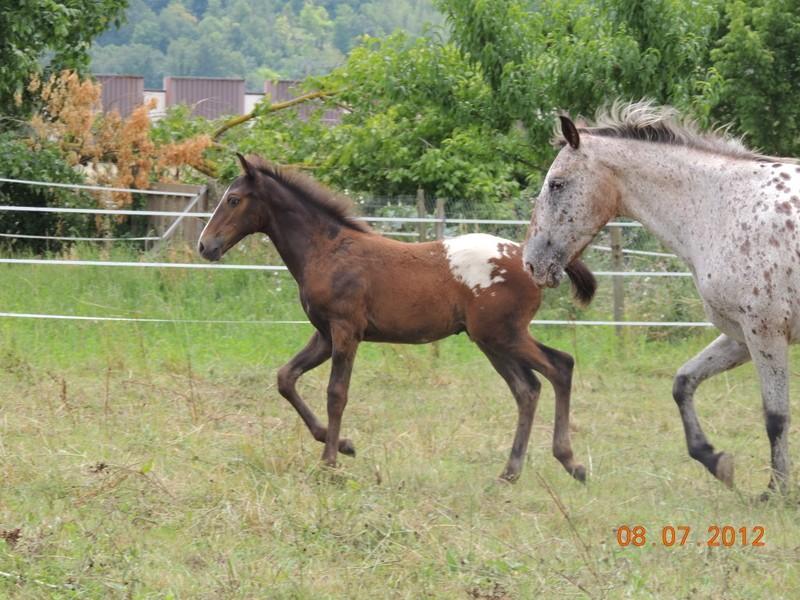 Mes chevaux, un mélange d'un peu tout le monde! Campbe22