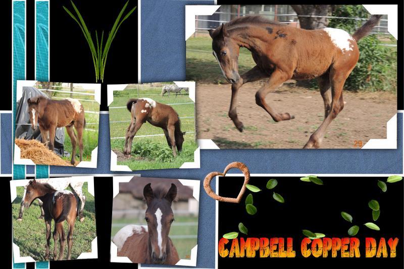 Mes petits montages photo!! Campbe33