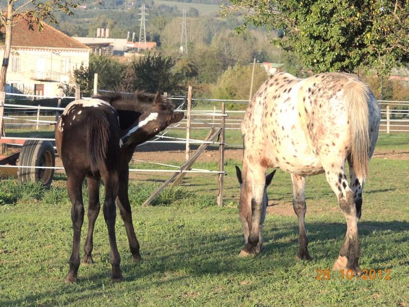 Mes chevaux, un mélange d'un peu tout le monde! - Page 2 Campbe40