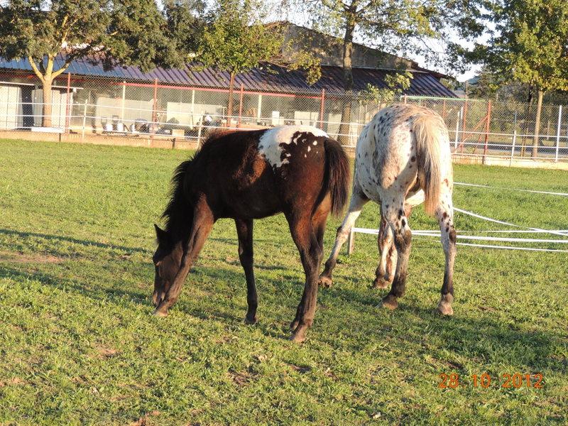 Mes chevaux, un mélange d'un peu tout le monde! - Page 2 Campbe41
