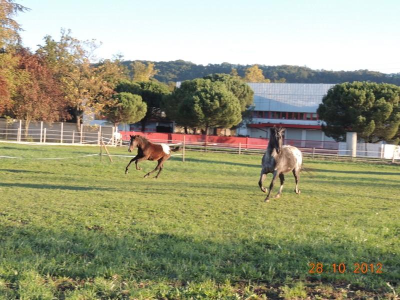 Mes chevaux, un mélange d'un peu tout le monde! - Page 2 Campbe42
