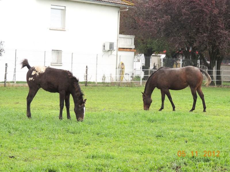 Mes chevaux, un mélange d'un peu tout le monde! - Page 2 Campbe48