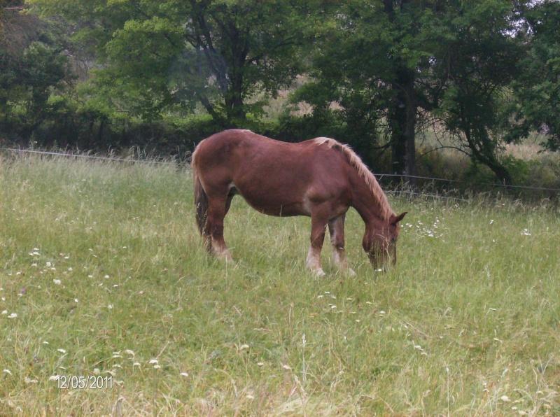 J'ai d'autre chevaux Elysae10