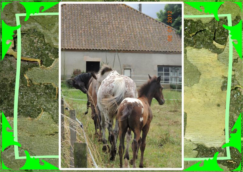 Mes petits montages photo!! Groupa11