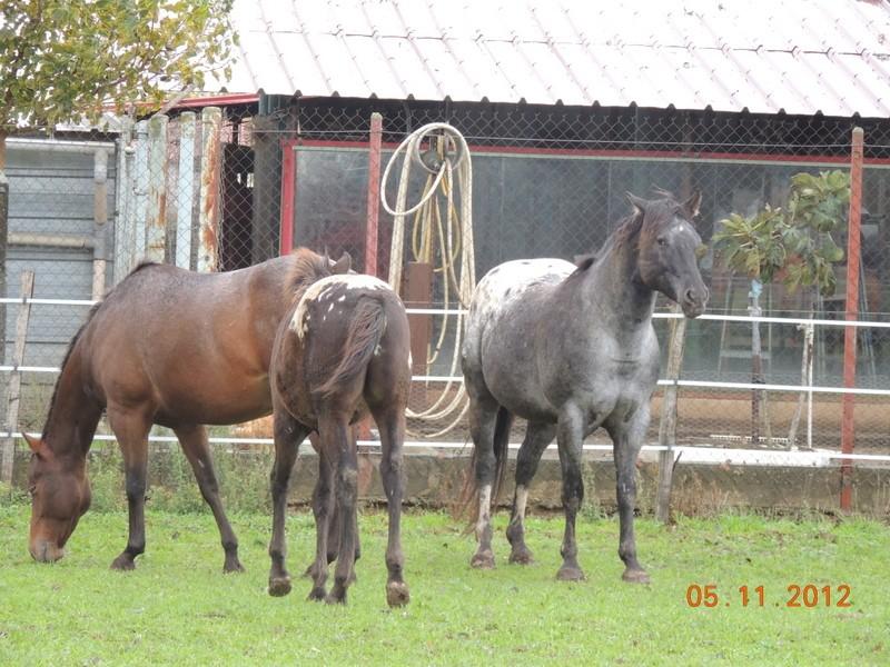 Mes chevaux, un mélange d'un peu tout le monde! - Page 2 Groupe10