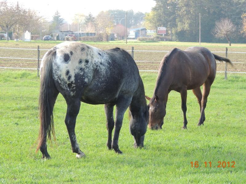Mes chevaux, un mélange d'un peu tout le monde! - Page 2 Groupe12