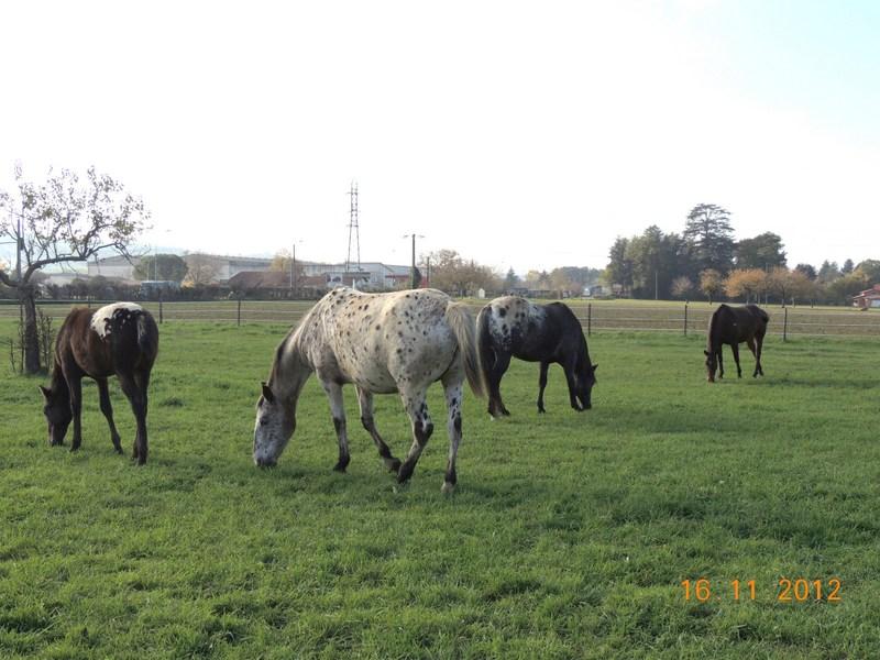 Mes chevaux, un mélange d'un peu tout le monde! - Page 2 Groupe13