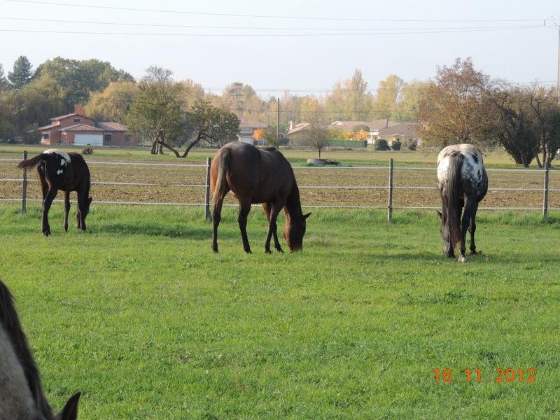 Mes chevaux, un mélange d'un peu tout le monde! - Page 2 Groupe15