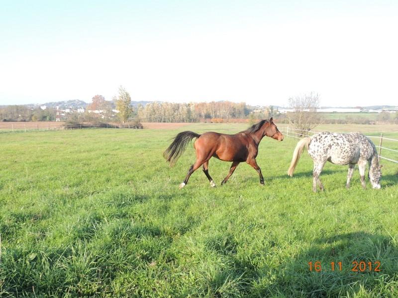 Mes chevaux, un mélange d'un peu tout le monde! - Page 2 Groupe16