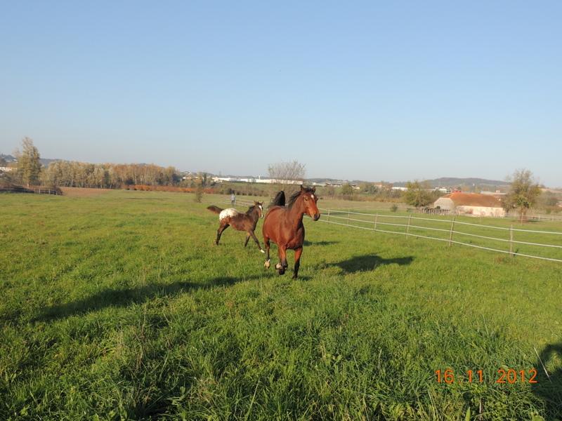 Mes chevaux, un mélange d'un peu tout le monde! - Page 2 Groupe17