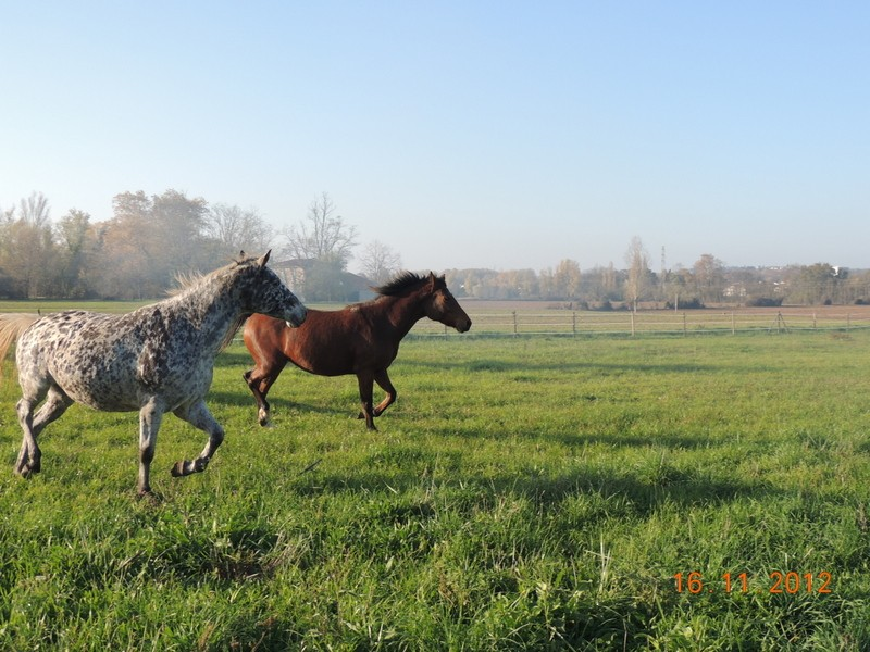 Mes chevaux, un mélange d'un peu tout le monde! - Page 2 Groupe18