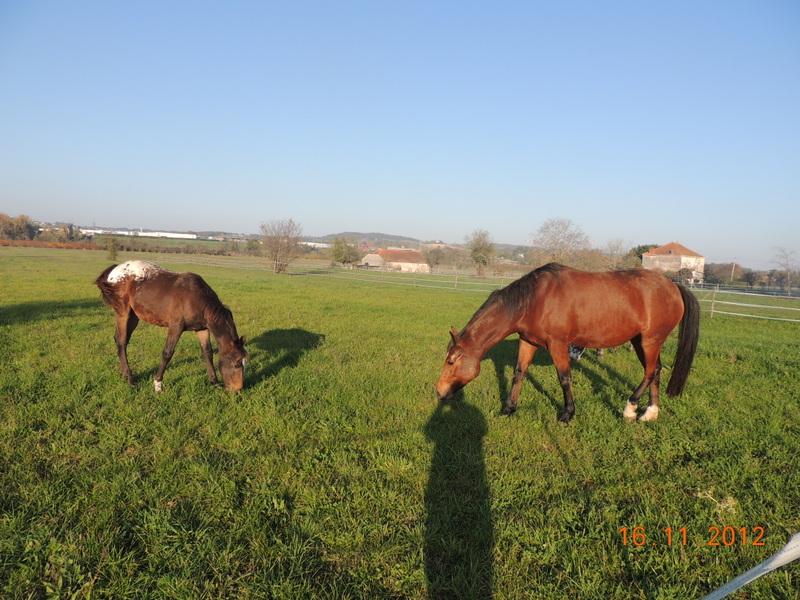 Mes chevaux, un mélange d'un peu tout le monde! - Page 2 Groupe19