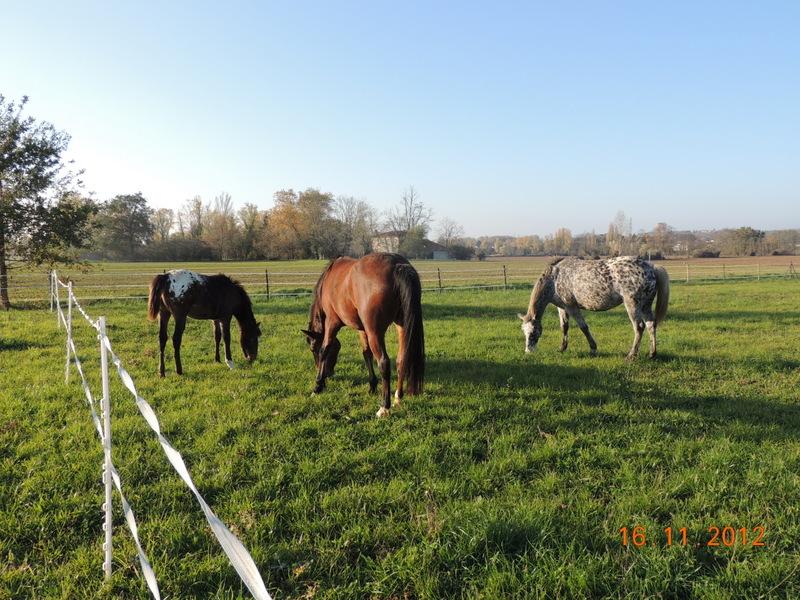 Mes chevaux, un mélange d'un peu tout le monde! - Page 2 Groupe20
