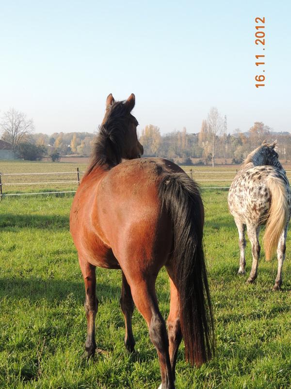 Mes chevaux, un mélange d'un peu tout le monde! - Page 2 Groupe21