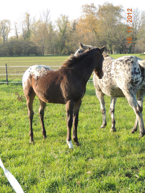 Mes chevaux, un mélange d'un peu tout le monde! - Page 2 Groupe22