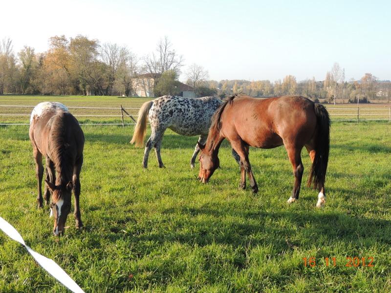 Mes chevaux, un mélange d'un peu tout le monde! - Page 2 Groupe23