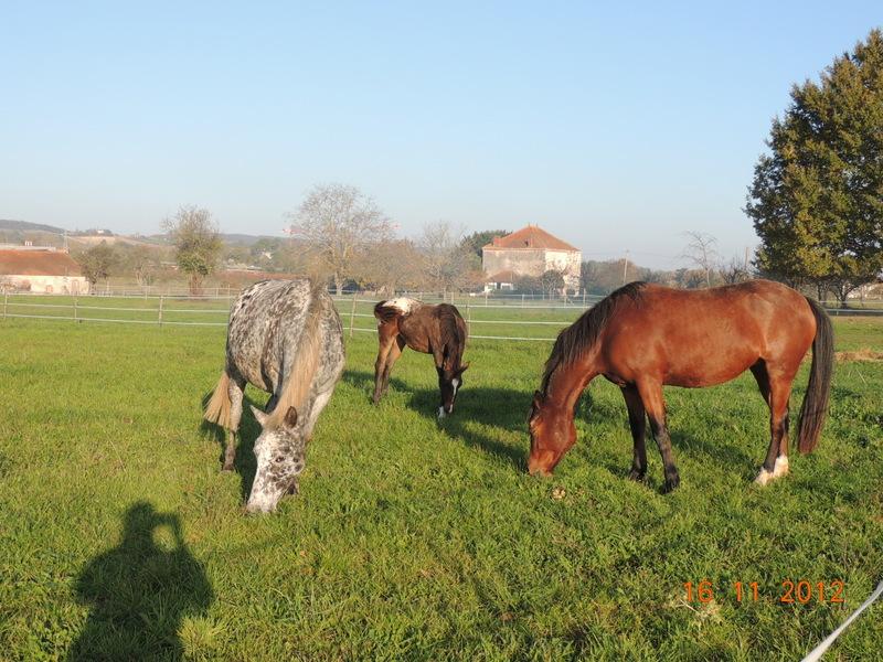 Mes chevaux, un mélange d'un peu tout le monde! - Page 2 Groupe24