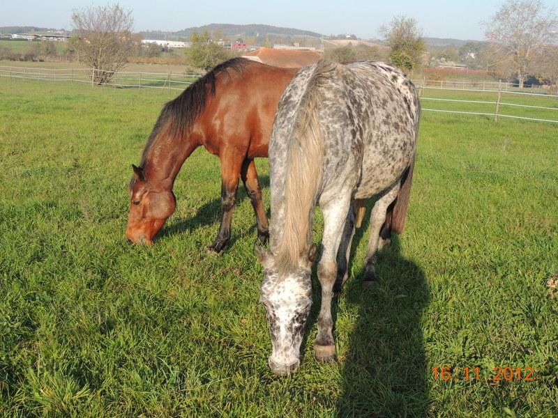 Mes chevaux, un mélange d'un peu tout le monde! - Page 2 Groupe25