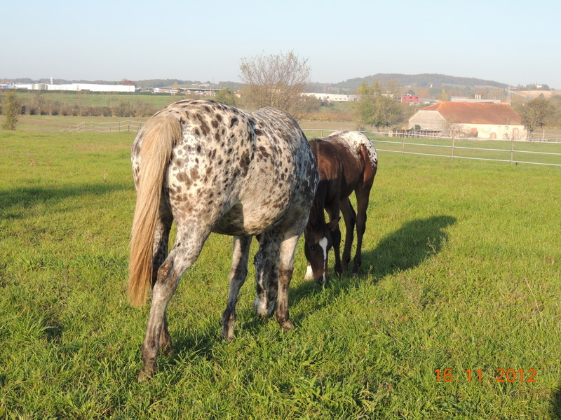 Mes chevaux, un mélange d'un peu tout le monde! - Page 2 Groupe26