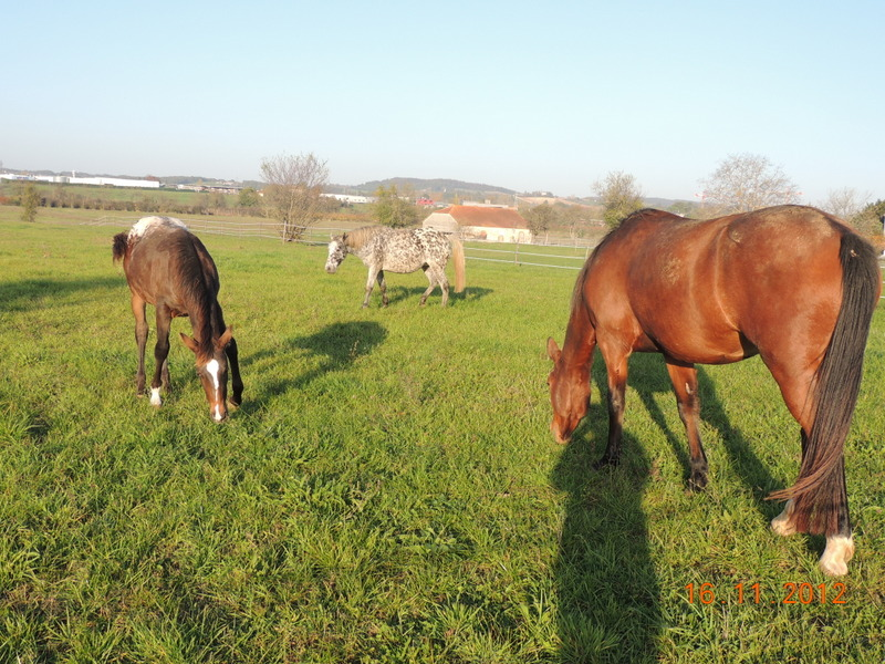 Mes chevaux, un mélange d'un peu tout le monde! - Page 2 Groupe27