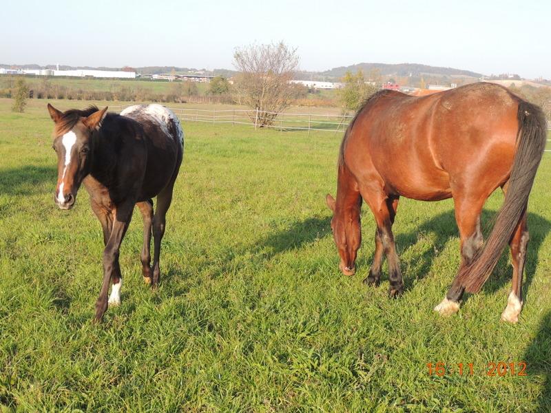 Mes chevaux, un mélange d'un peu tout le monde! - Page 2 Groupe28