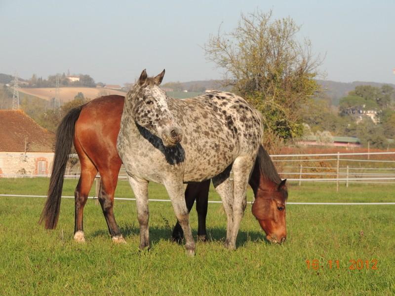 Mes chevaux, un mélange d'un peu tout le monde! - Page 2 Groupe29