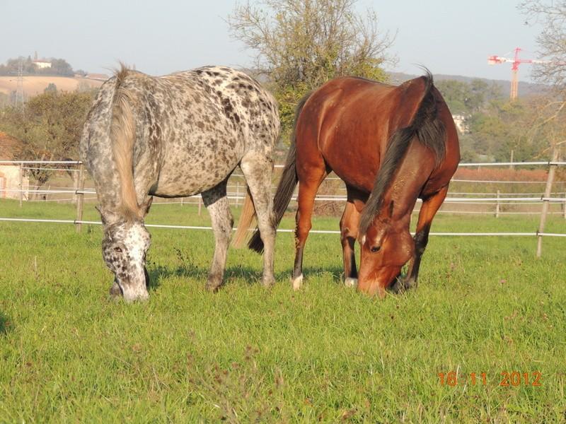 Mes chevaux, un mélange d'un peu tout le monde! - Page 2 Groupe30