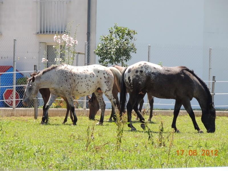 Mes chevaux, un mélange d'un peu tout le monde! Le_tro10