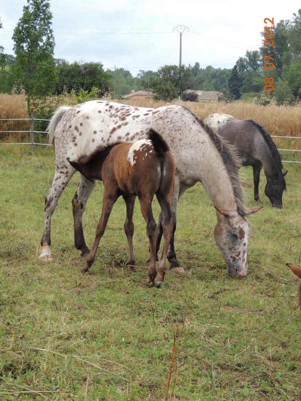 Mes chevaux, un mélange d'un peu tout le monde! Le_tro12