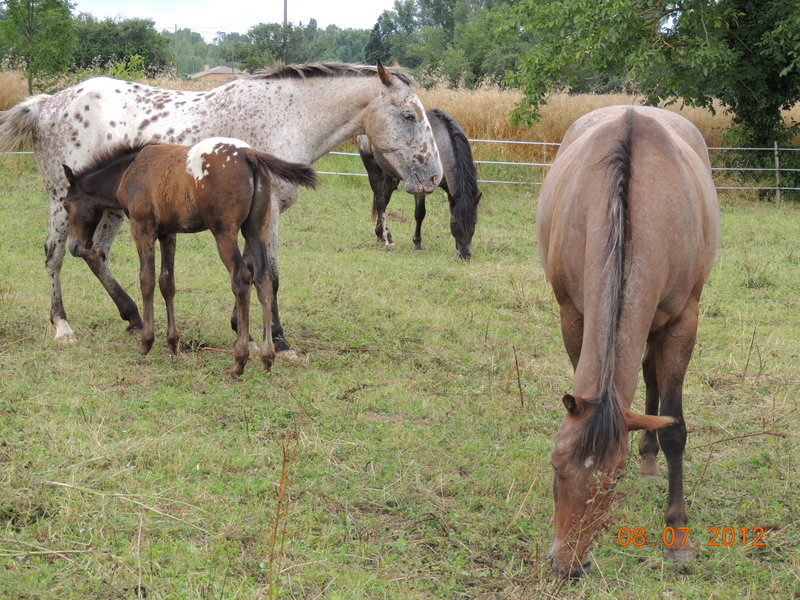 Mes chevaux, un mélange d'un peu tout le monde! Le_tro13