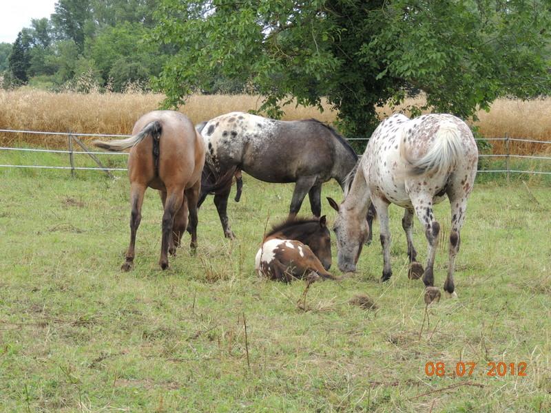 Mes chevaux, un mélange d'un peu tout le monde! Le_tro15