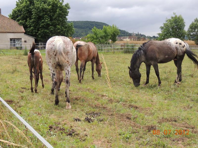 Mes chevaux, un mélange d'un peu tout le monde! Le_tro16