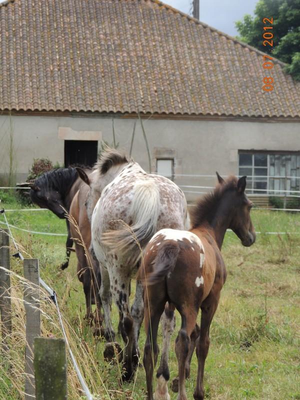 Mes chevaux, un mélange d'un peu tout le monde! Le_tro17