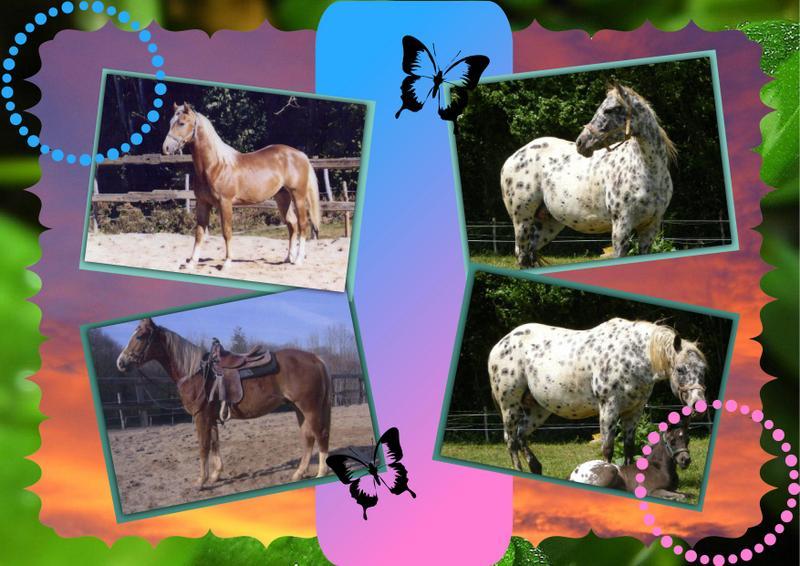 Mes petits montages photo!! - Page 2 Les_pa11