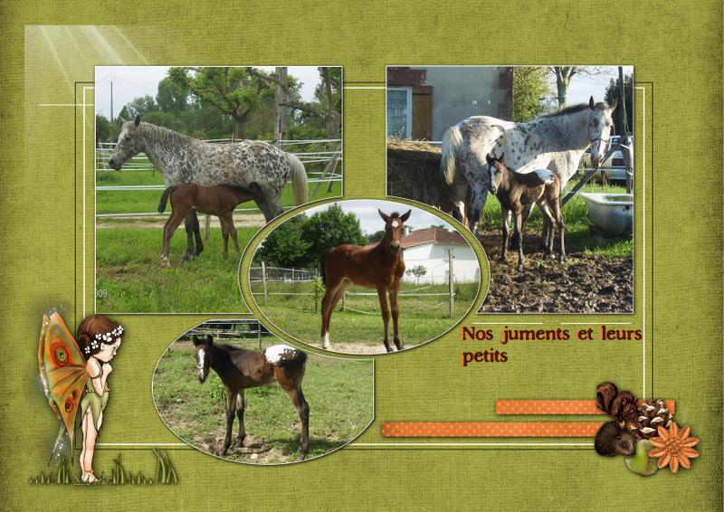Mes petits montages photo!! - Page 2 Les_po12