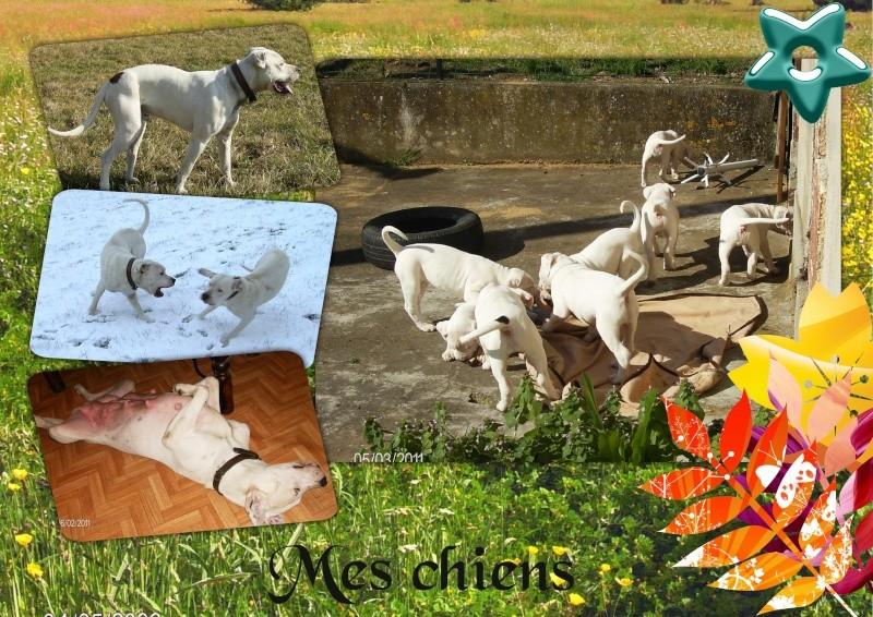 Mes petits montages photo!! Mes_ch11