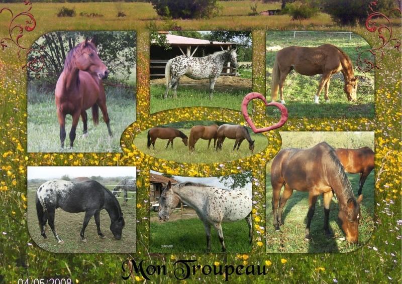 Mes petits montages photo!! Mon_tr11